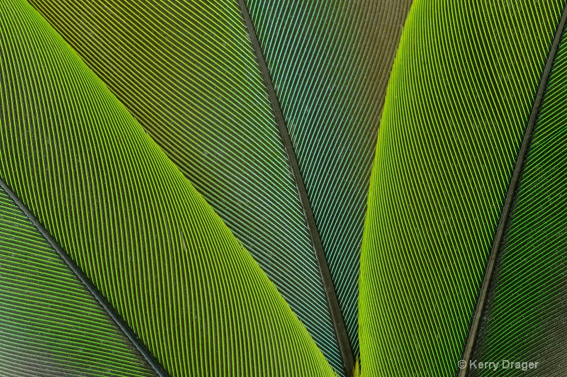 Feather Pattern - Green