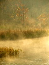 Beavers Bend's Morning Mist