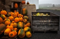 Pumpkins and Fall Squash at the Country Market