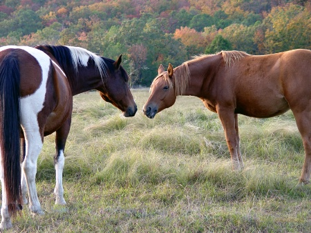 Horses Like Fall, Too