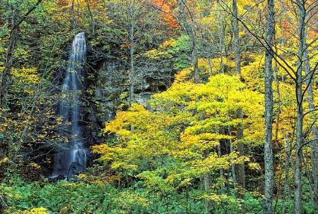 Oirase River Autumn