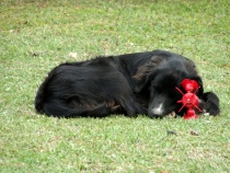 "Sleeping With The Latest ""Chew Toy"""