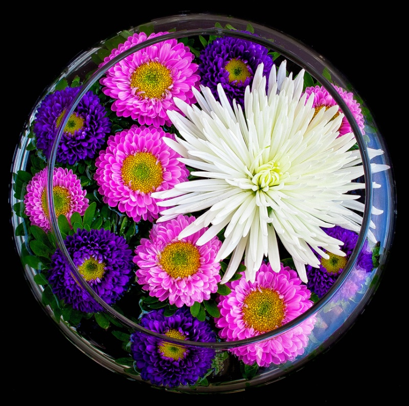 Asters and a Mum Floating in the Round