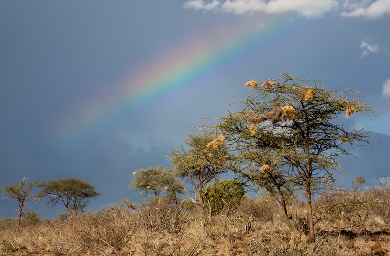 A Rainbow in Samburu forest