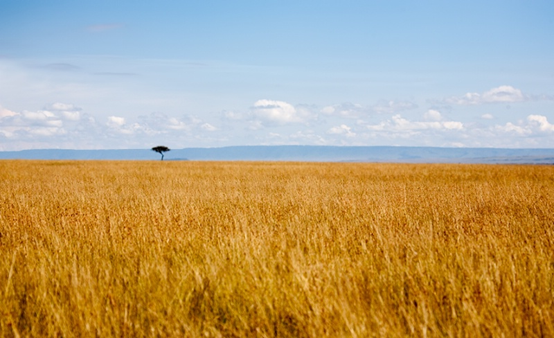Golden Grasslands of Masai
