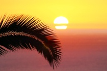 Sun & Palm