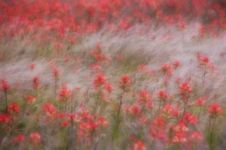 Buzzy Dreamy Flower Field