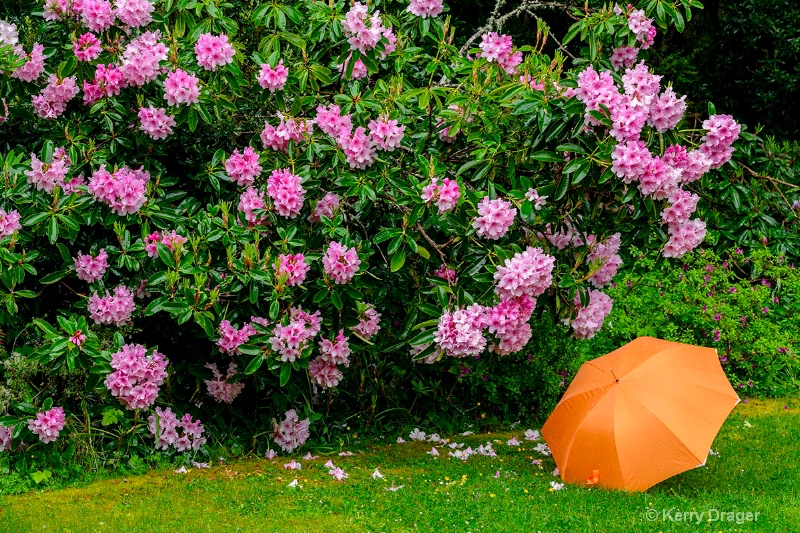Umbrella in Garden 1