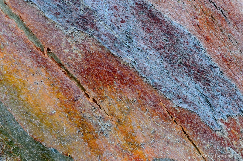 Abstract Bark Pattern 3