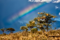 A Rainbow in Samburu