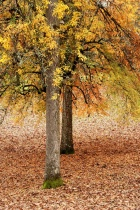 Bush Pasture Tree...