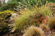 Grasses & Color