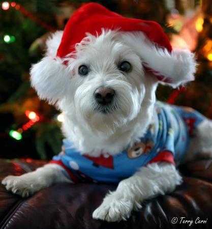 Gabby's Christmas
