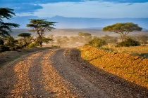 A glimpse of Masai Mara