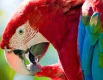 Macaw Colours