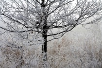 Heavy Frost And Fog