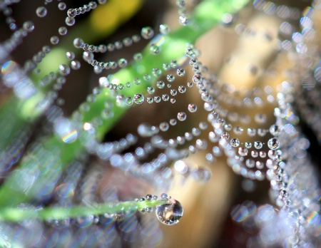 A Dewy Website