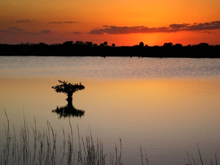 Mangrove Singularity