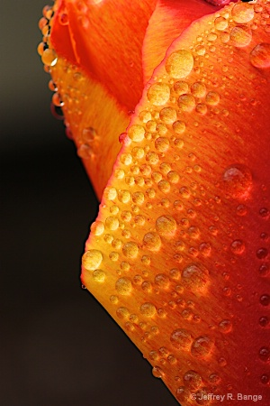 """Water Droplets"""