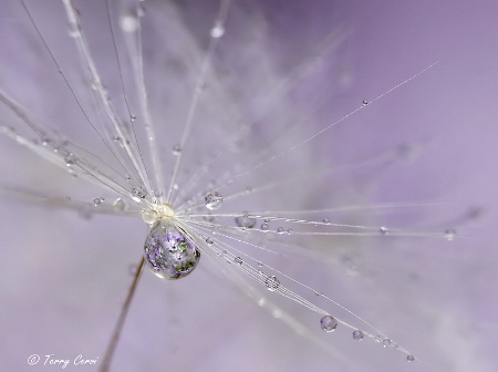 Orchid Droplets