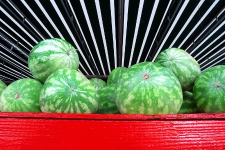 Farm fresh watermelons