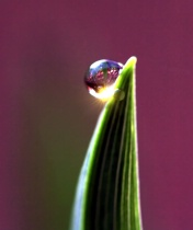 A Drop Of Light And Color