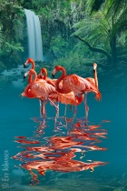 Fabulous Flamingo...