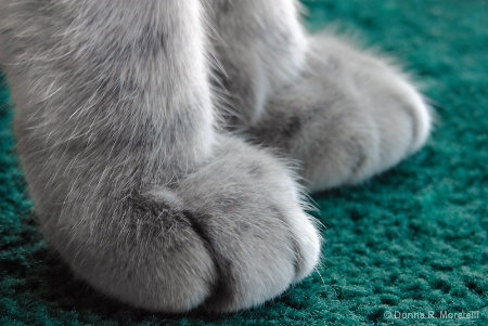 These paws