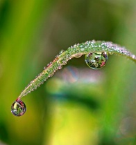 Heavy Dew On The Grass