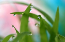 I See Dewdrops With Pictures