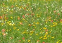 Flowerful Meadow