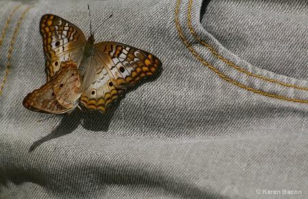 a butterfly stitch