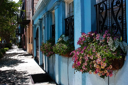 Flowers of the Row Houses