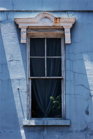Fern in a Window in Blue