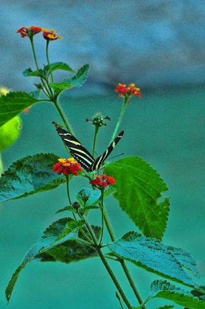 A  BUTTERFLY  ON THE  FLOWERS