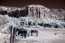 Abiquiu Donkeys