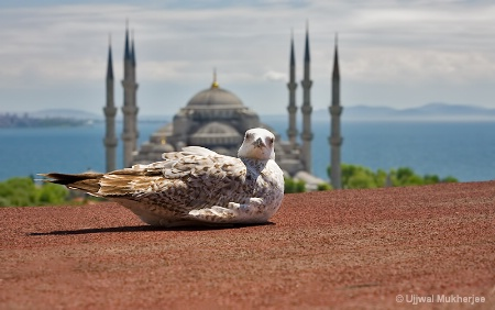 A Seagull in Istanbul