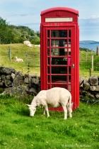 Call for Ewe