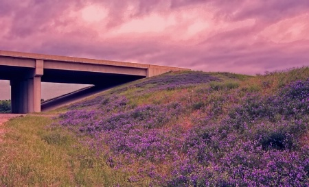 Wildflowers Along The Highway