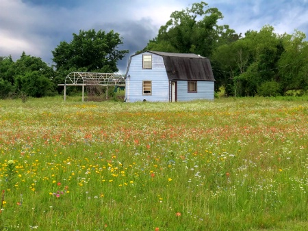 The Blue House And The Wildflowers