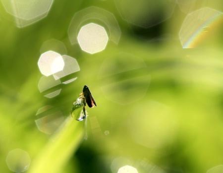 A Bug On A Bubble