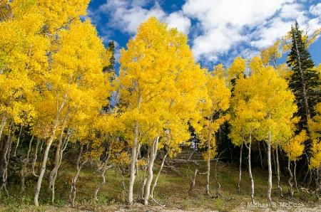 Autumn Colors Cedar Breaks NM, Utah