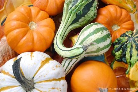 Still life. September gourds