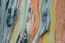 Eucalyptus Patter...