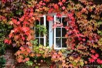 """""""Autumn Color..."""