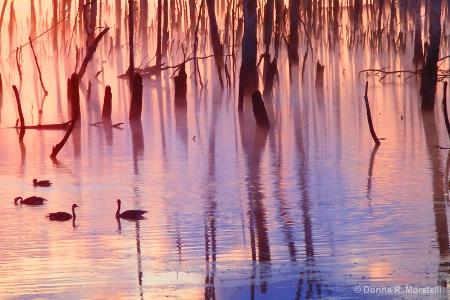 flooded florest