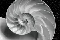 Nautilus Shell De...