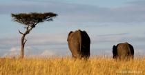 Masai Mara Wildli...