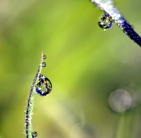 Clarity In The Dewdrops