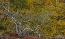 Autumn Colours, I...